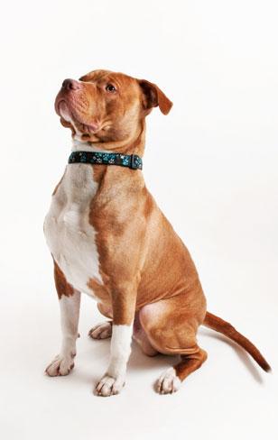All good dogs deserve portraits!